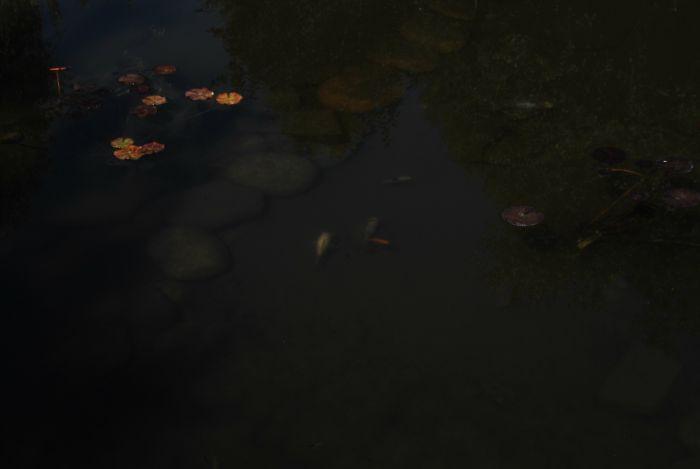 pecesitos